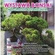 Zapraszamy do Ogrodu Botanicznego na wystawę bonsai